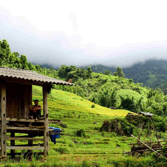 Go-Indochine cottage in rice paddy North Vietnam